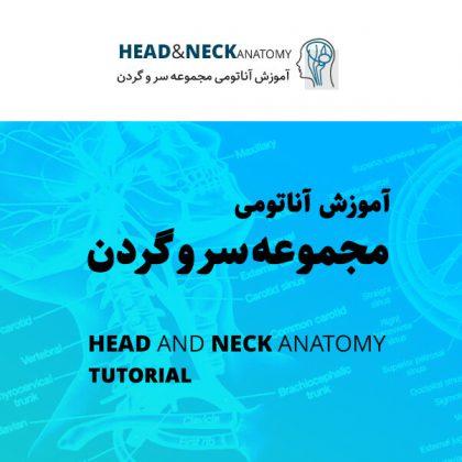 آموزش آناتومی سر و گردن