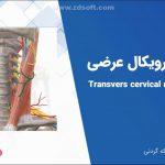 فیلم آموزشی آناتومی اندام فوقانی